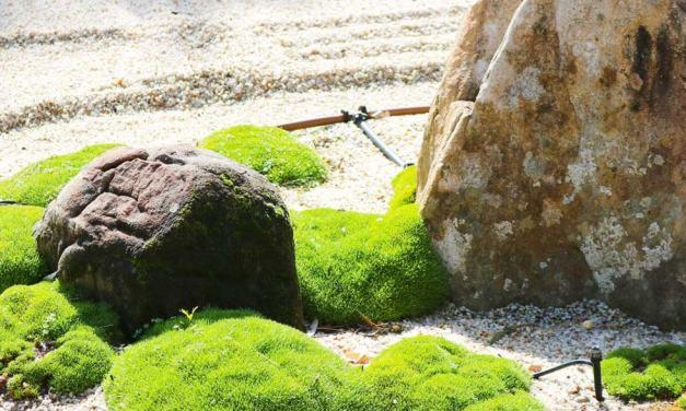 Adelaide Himeji Garden (Japanese Garden)