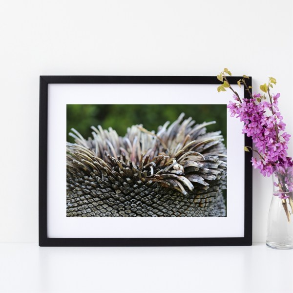 Nature Photography Fine Giclee Print | Adelaide Botanic Gardens, South Australia | Size A4 | By Adelaide Artist Charlie Albright | Moments by Charlie Blog - Online Shop - Creative Freelance Services | Adelaide, South Australia