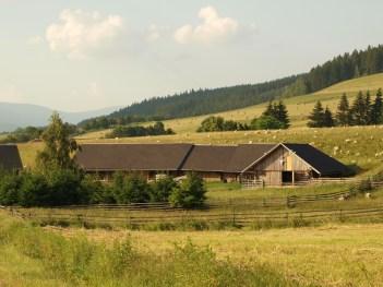 Sheep home