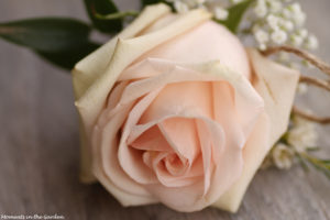 Simple rose-6626