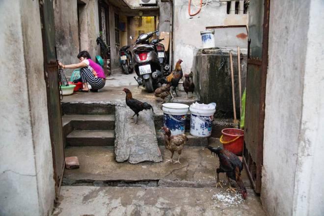 Hanoi-moments of yugen-Chickens