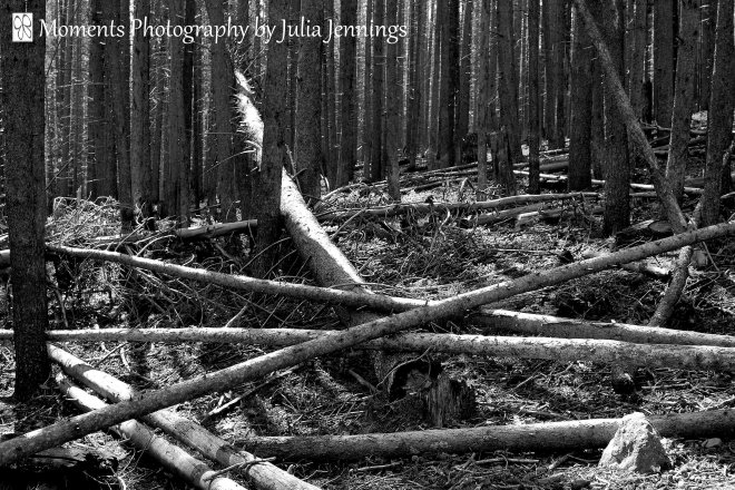 2-Moments-Photography-by-Julia-Jennings-Dying Forest