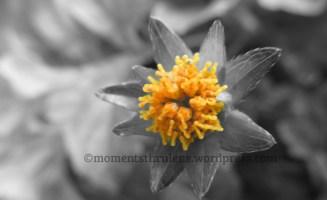 Starry Flower