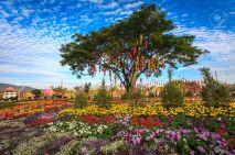 20894836-Linterna-tailandesa-en-un-rbol-en-el-jard-n-de-flores-coloridas-Chiang-Mai-Tailandia-Foto-de-archivo