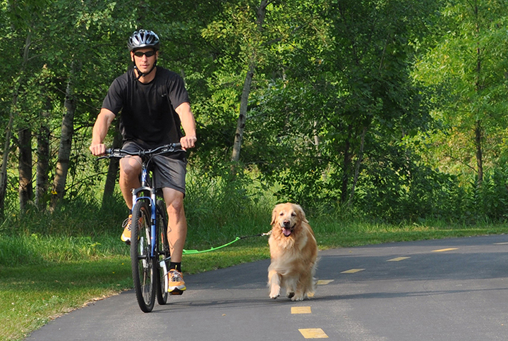 Bike Dogs Review Leash