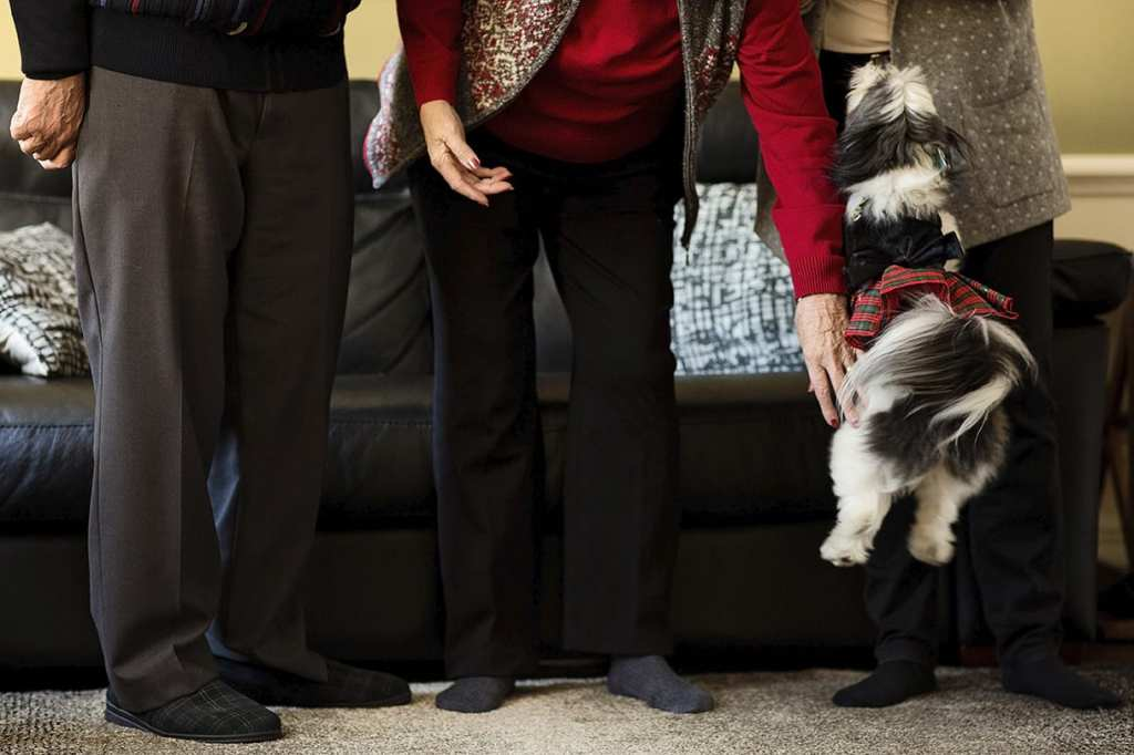 small dog wearing plaid tutu leaps in air in front of legs of three adults