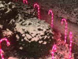 1000Bulbs.com: Candy Cane Lights