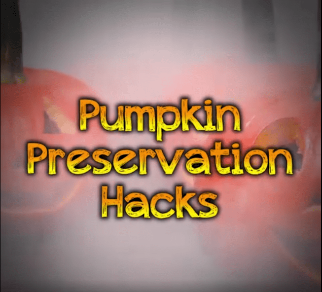 pumpkin preservation hacks