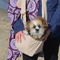 Puppy's 1st Day at Beach & Pet Sling Review