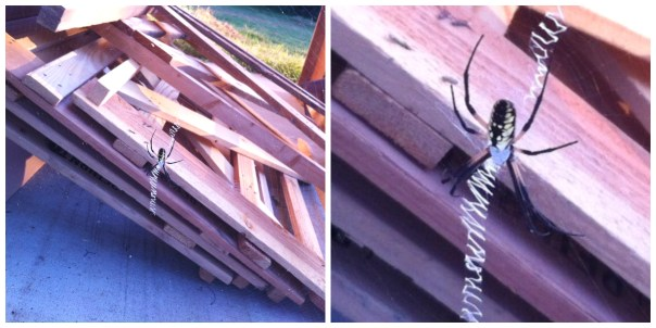 It all started with this huge pile. The spider was busy working on her web, while I was busy taking apart the wood.