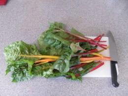 rainbow chard - a pretty veggie to grow and eat!