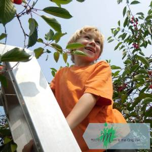 little boy smiling on ladder in cherry tree