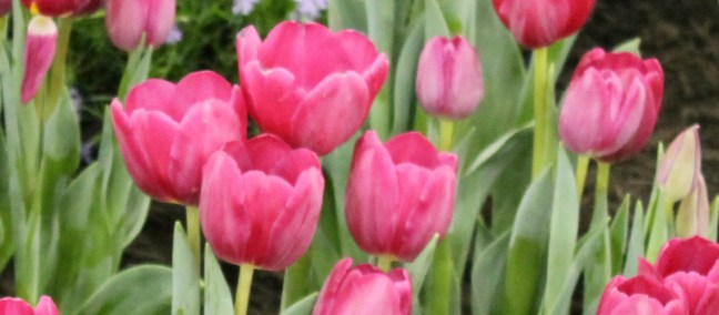 Spring Gardening Trends