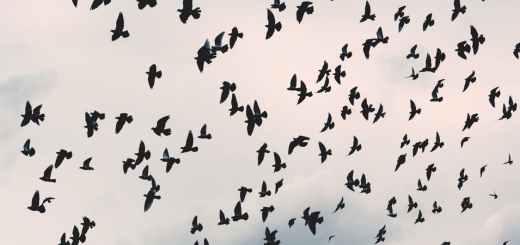 禽流感H7N9症狀如何預防