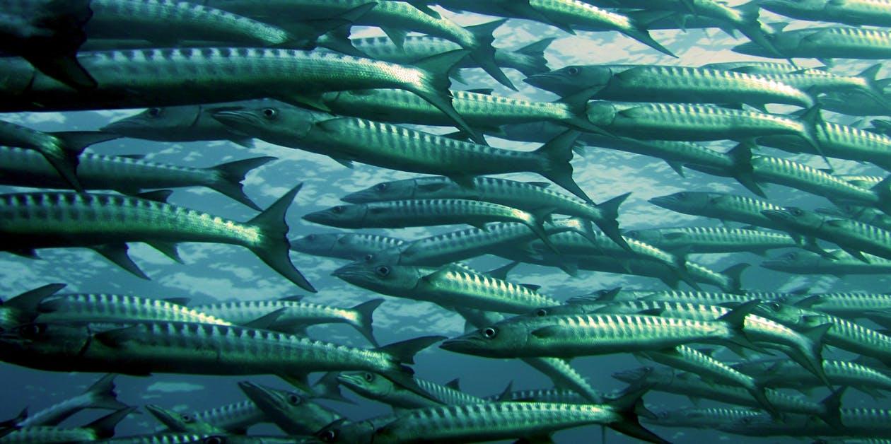 孕婦吃深海魚過量 重金屬可能對胎兒造成影響