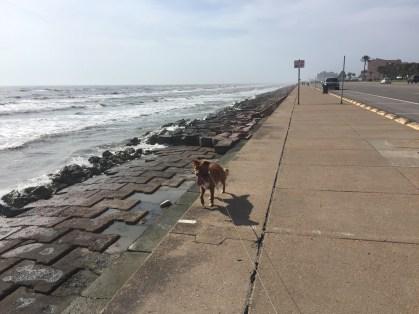 Running on Seawall