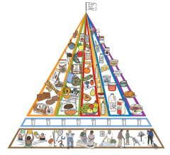 NIH food pyramid