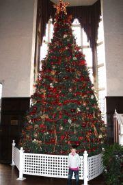 Casa Loma - big Christmas tree
