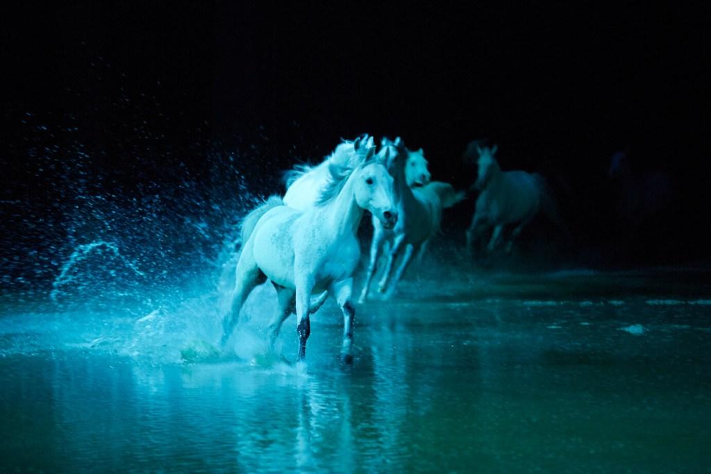 Arabian horses Cavalia