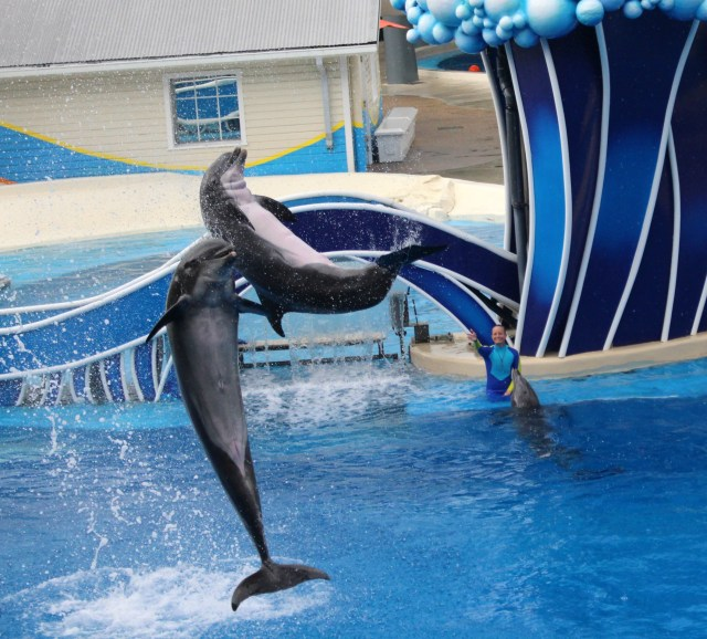 Sea-world-show-tips-Orlando