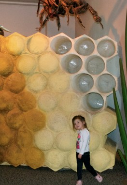 Maddie in front of a bee hive in the insect exhibit.