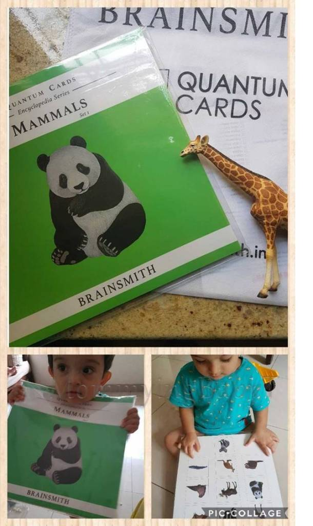 brainsmith, quantum cards, flash cards, mammals, animals, mumbai blogger, teaching kids, children learning, learning through play, books, reading, raising a reader