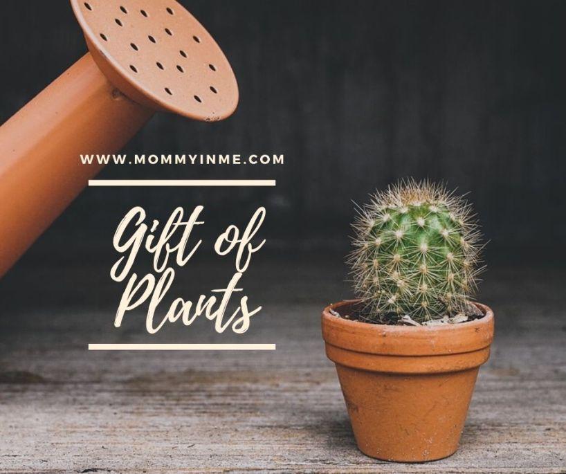 10 best Children's day gift ideas #HappyChildrensDay . #gifting #gift #giftideas #childrensday #pottedplants