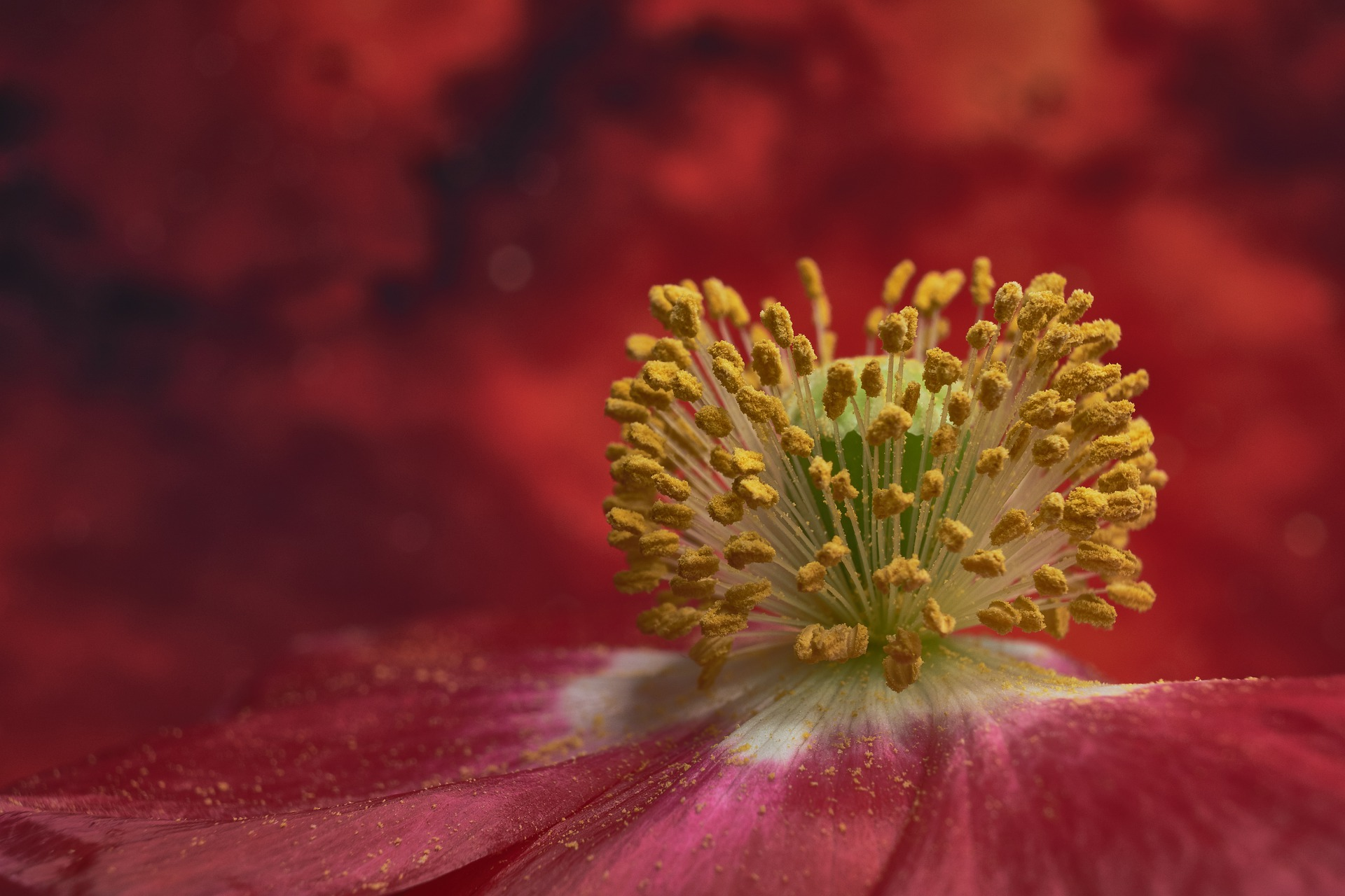 What is Pollen Allergy : Are you suffering from Seasonal allergy?