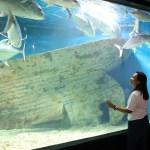Revisiting Manila Ocean Park