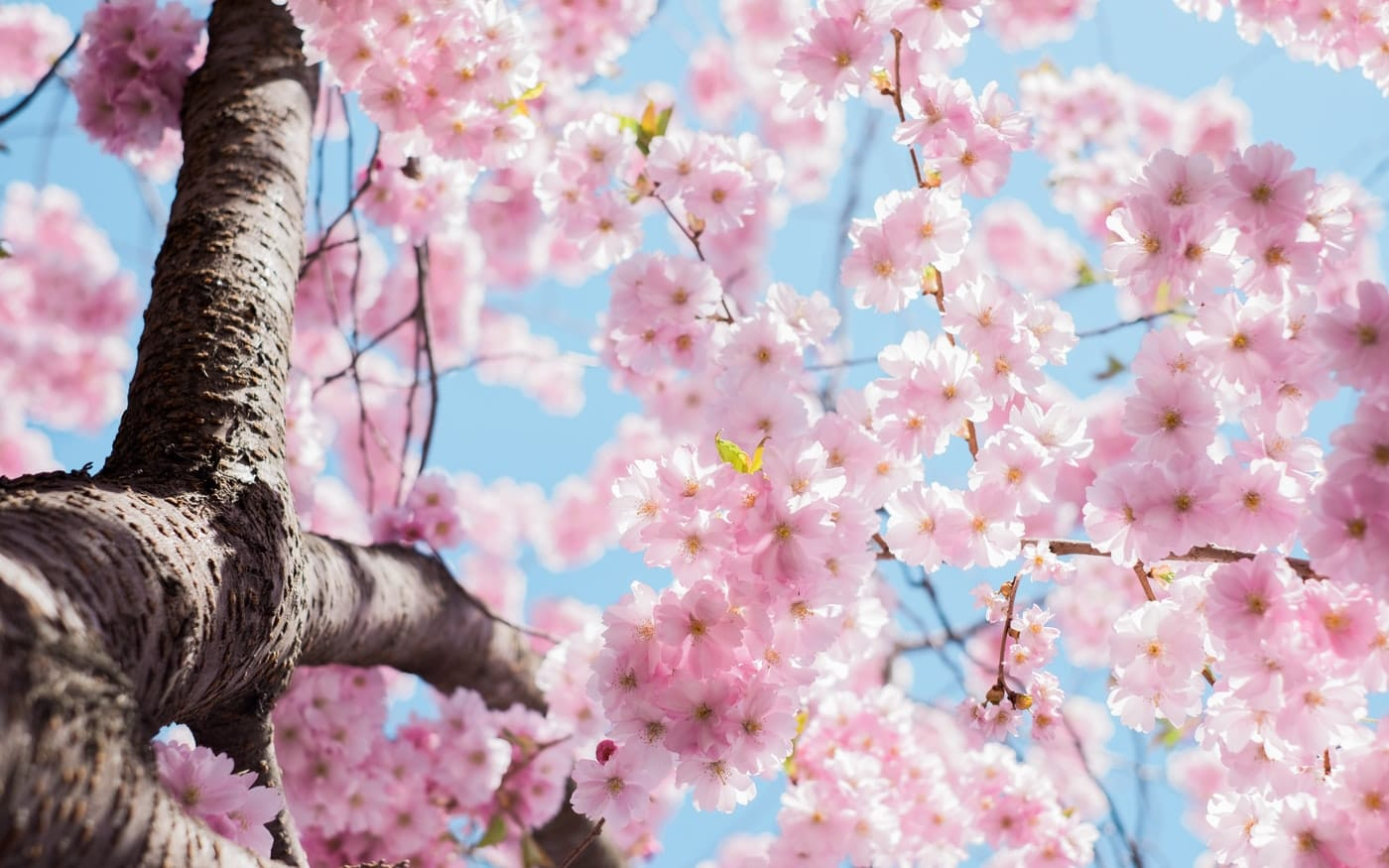 Renew You: 6 Healthy Changes to Make this Spring