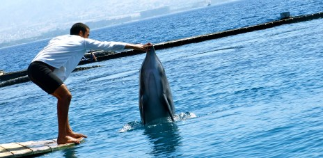Destination: Eilat, Diving with Dolphins
