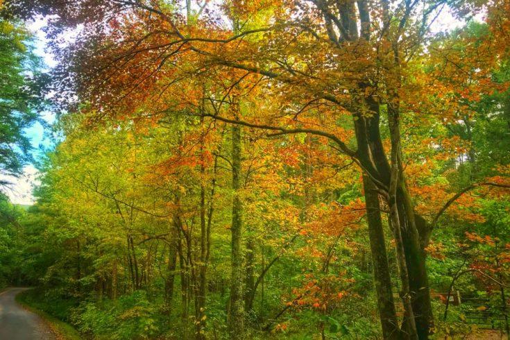 Fall in North Georgia