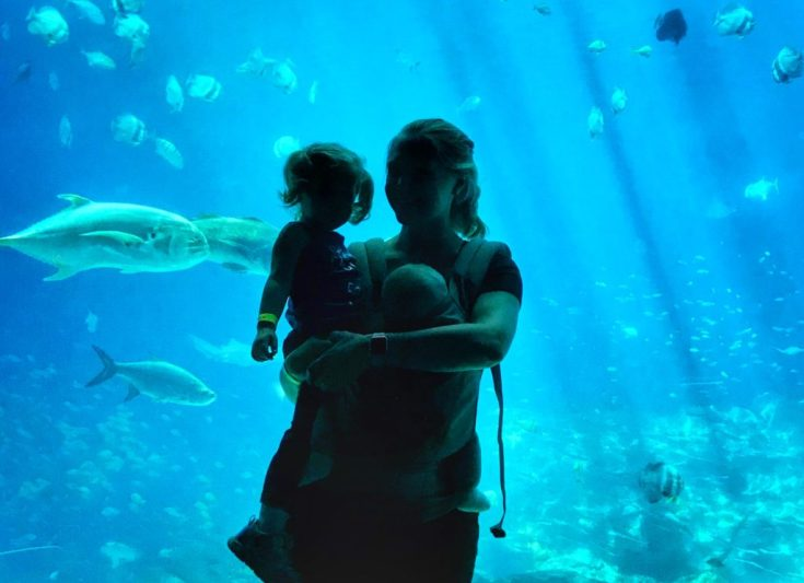 Exploring the Georgia Aquarium with Toddler