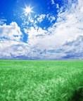 A green wheat field under an blue sky with the sun in zenithþ XX