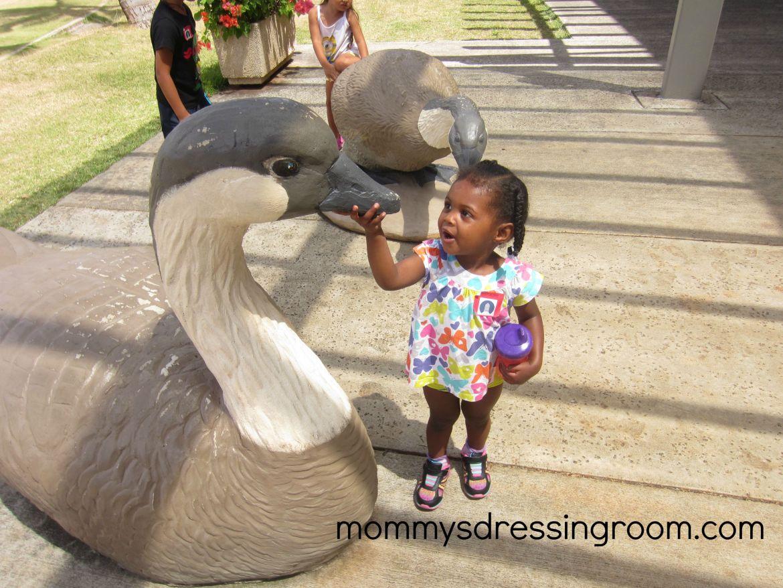 Vayda playing with the quack quacks!