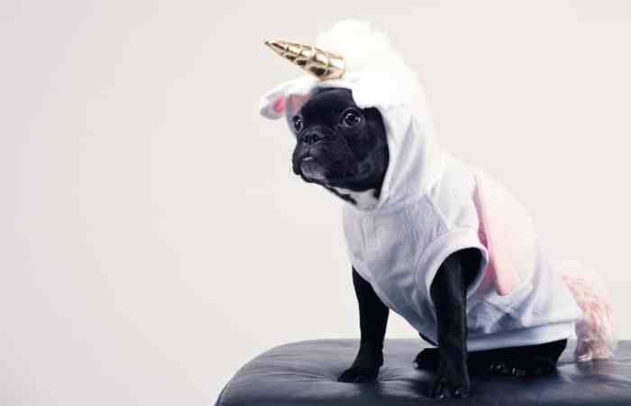 costumes for your dog