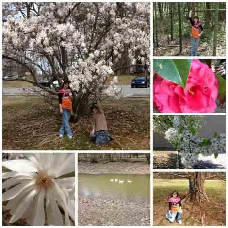 spring in winston-salem Collage