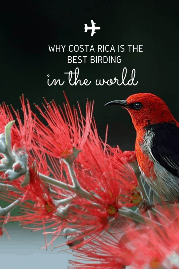 The Best Birding Destination in the worls is Costa Rica, which is considered to be one of the best experiences for those who like bird watching.