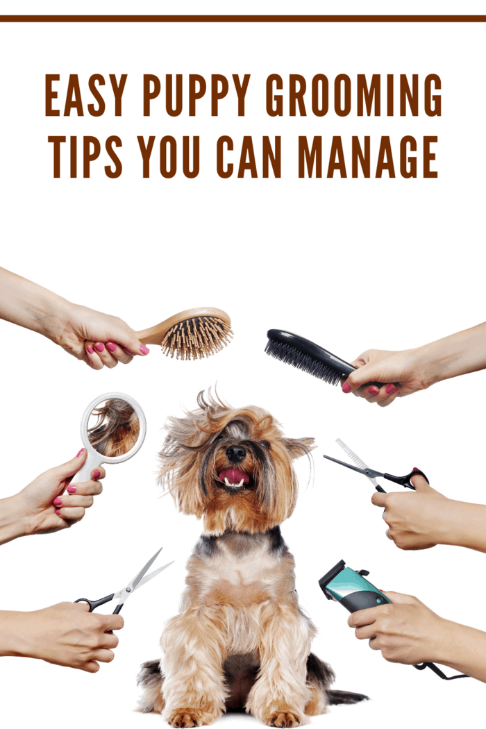 We're here to help you keep up with your puppy's grooming with these tips that you can manage even as a busy mom.