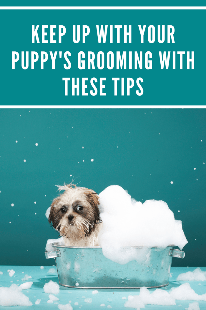 Choosing your dog's shampoo can be quite difficult but your local veterinarian can advise you on selecting the perfect one.