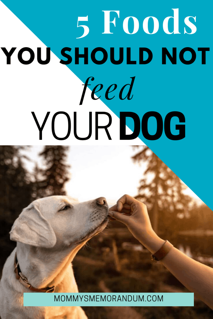 We love to feed our dogs a treat, but there's some food we eat that's surprisingly dangerous for them; here are 5 foods you should never feed your dog.