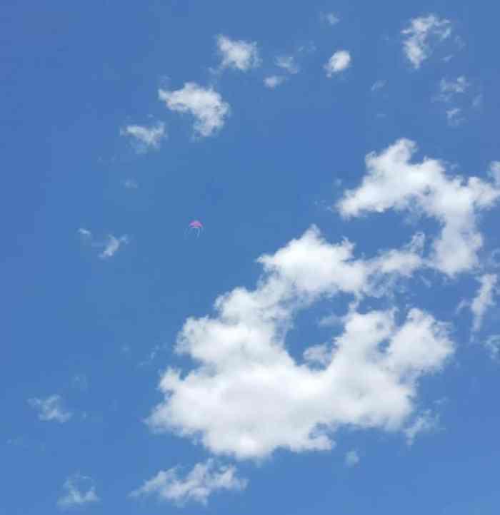 antsy pants fish kite soaring in sky