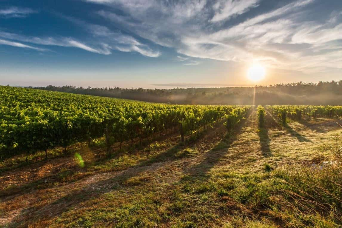 Tuscan sun setting over grave vineyard in Tuscany