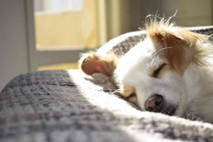Know About These 10 Common Dog Disease and Their Cure