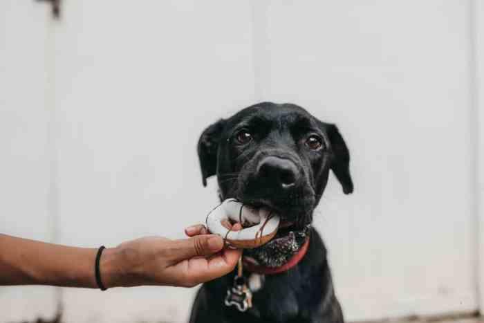 yummy homemade dog treats