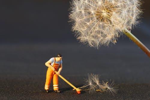 man sweeping up dandelion flower wish petals
