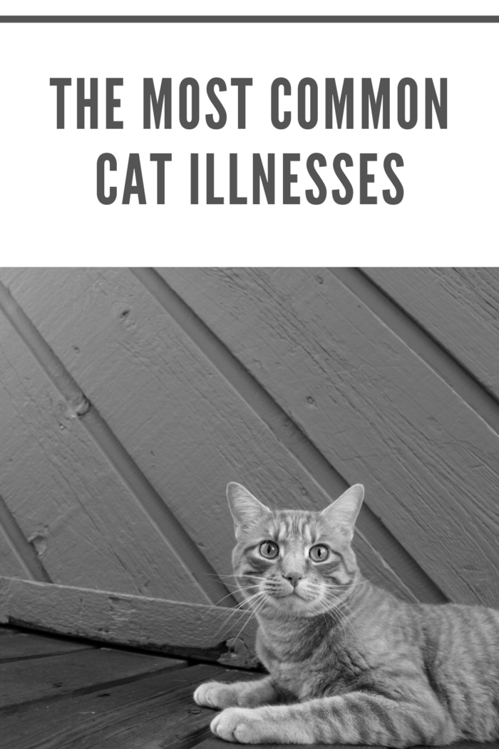 Cats can be strange at the best of times, but if you know your cat well, you'll most likely know what to expect from their regular habits.