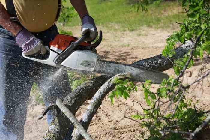 chainsaw cutting branch of tree