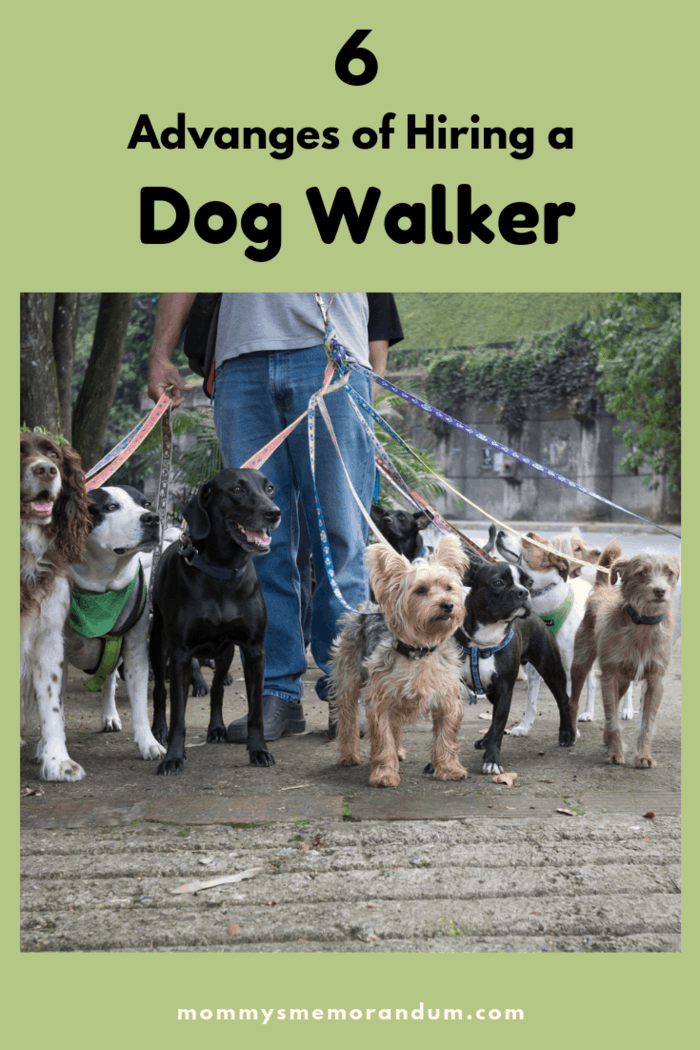 Getting some help from a dog walker is a win-win for you and your pet. He gets to go for walks and you don't have the stress.