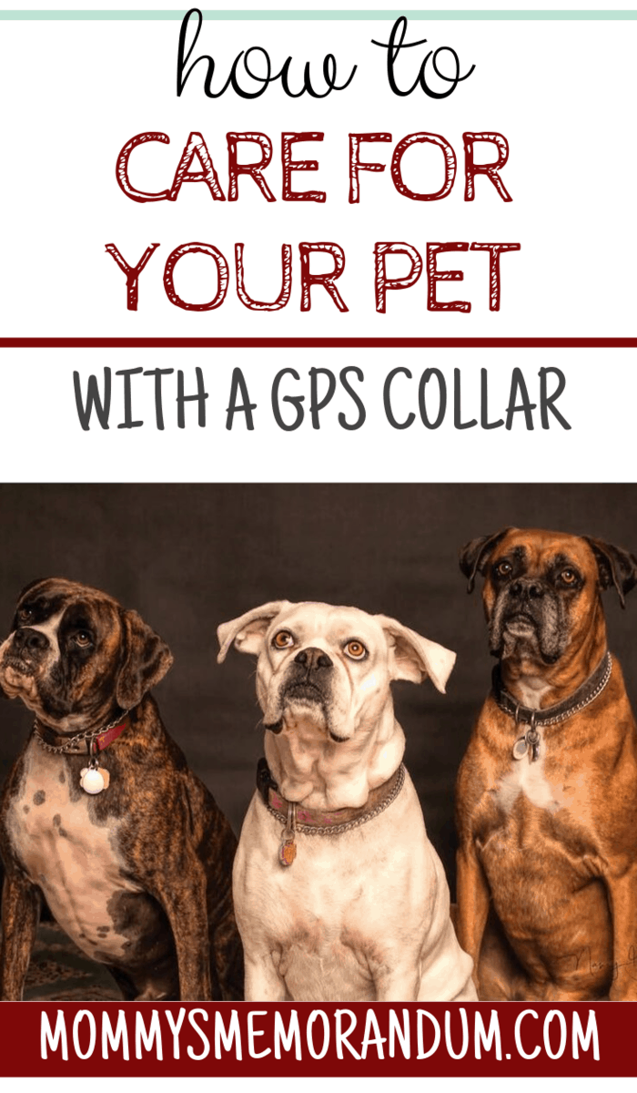 Learn more about the different features and capabilities each GPS collar has to ensure you're choosing the right one for your furry friend!